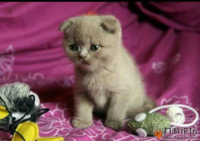 猫咪与人可爱头像