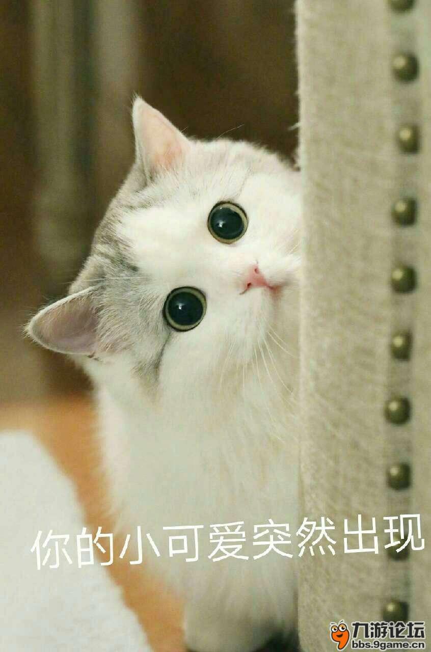 手机游戏论坛 69 休闲区 69 斗图大会 69 猫咪表情包