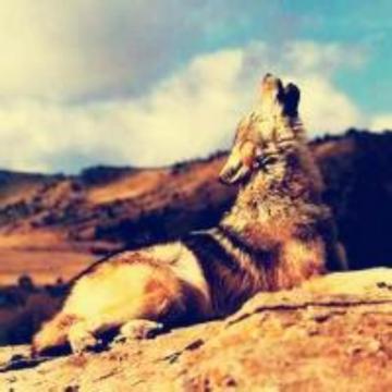 天涯丶独狼
